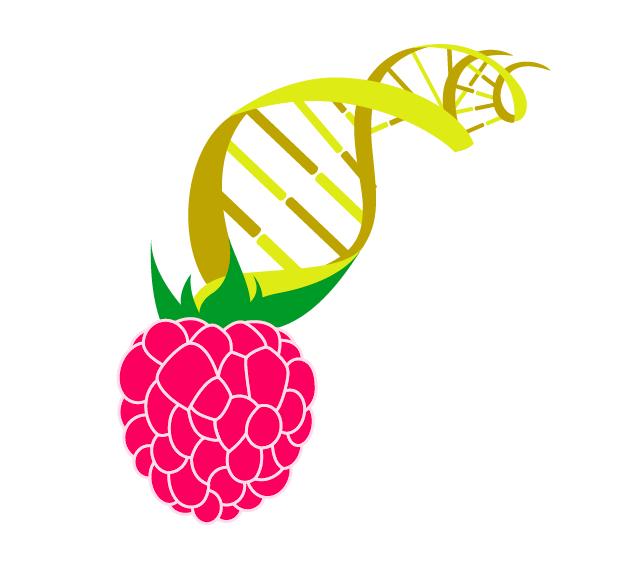 logo berry