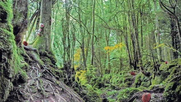Natürlich künstlich. Ballonartige Wesen bekämpfen Baumparasiten, synthetische Schnecken neutralisieren sauren Boden, stachelschweinige Kreaturen sammeln und verteilen Samenkörner.... - Bild: Alexandra Daisy Ginsberg